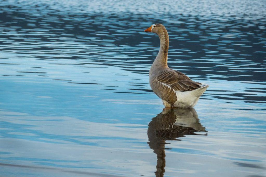 水辺にたたずむ1羽の水鳥
