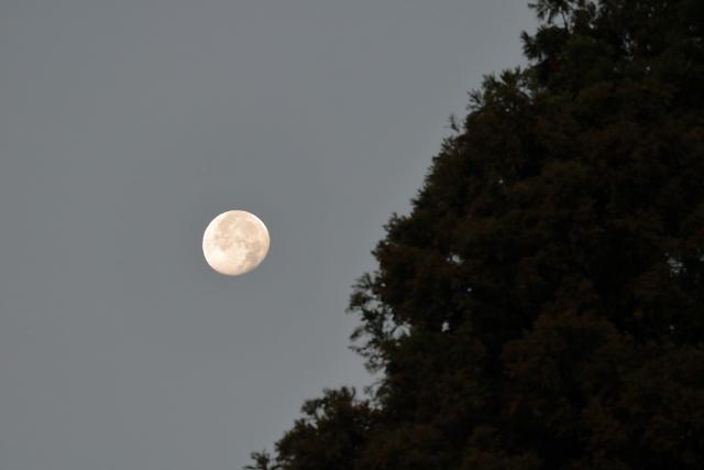 明け方に空に淡く光るお月さま