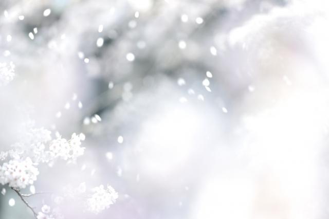 吹き込む風によって淡白く散る桜吹雪