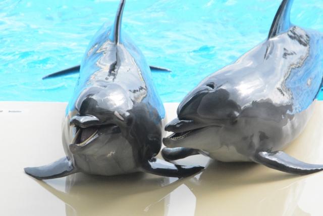 にんまり笑う2頭のイルカ