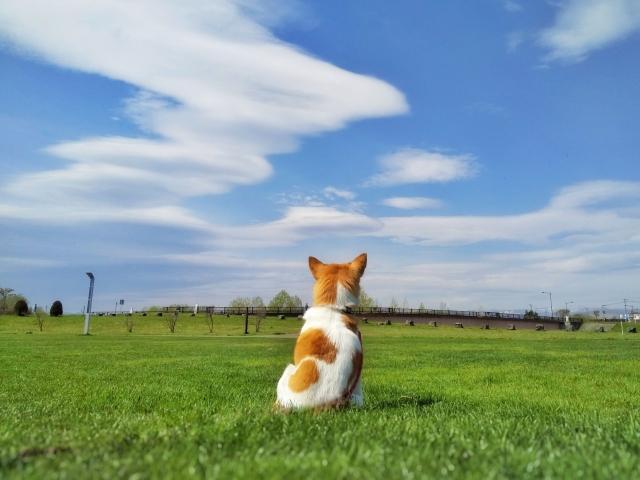 空を見つめる一匹の犬