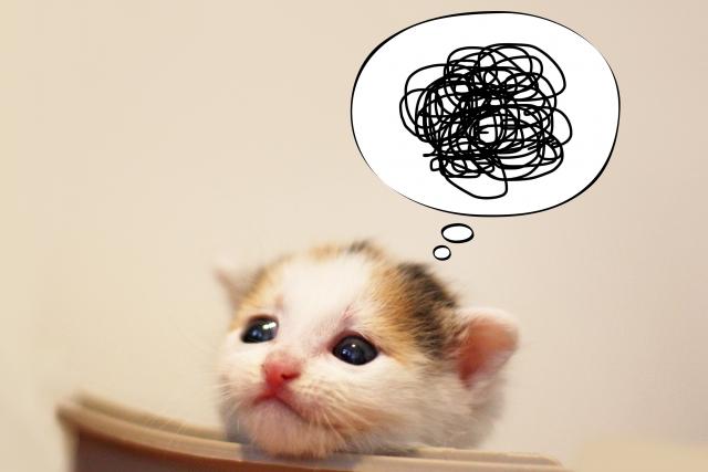 悩める子猫