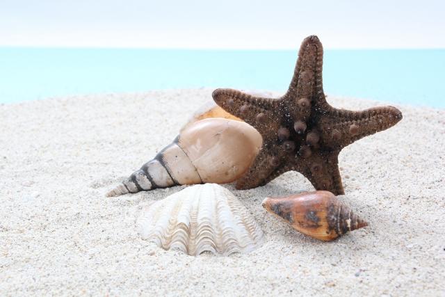 海辺でポーズを決めるヒトデ