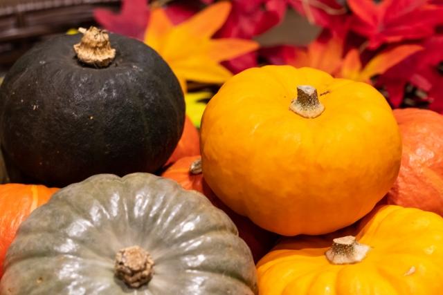 たくさんのミニかぼちゃ
