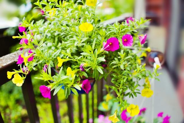 バルコニーと植物