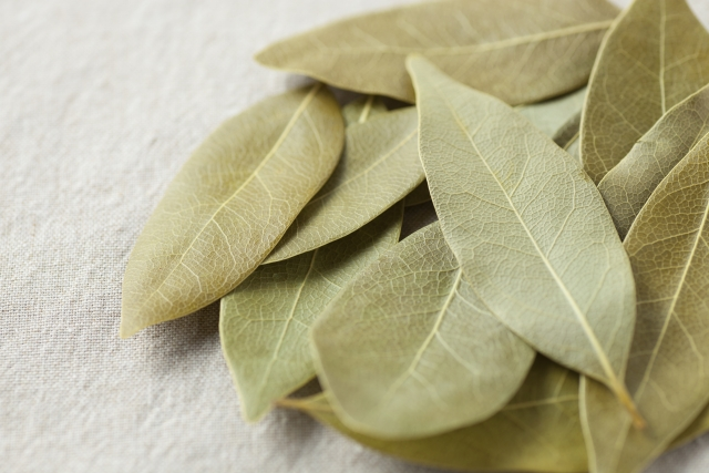乾燥したローリエの葉っぱ
