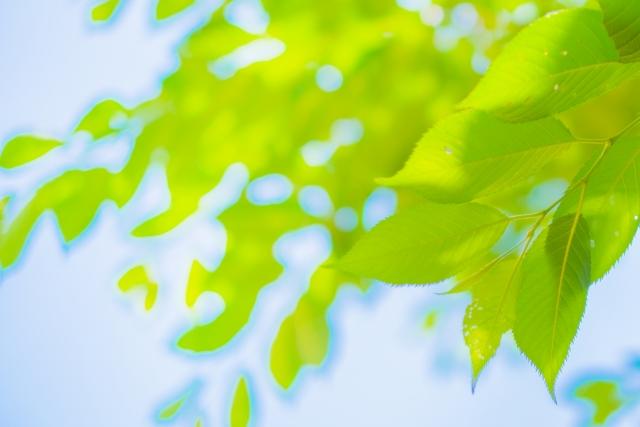 木々の緑色