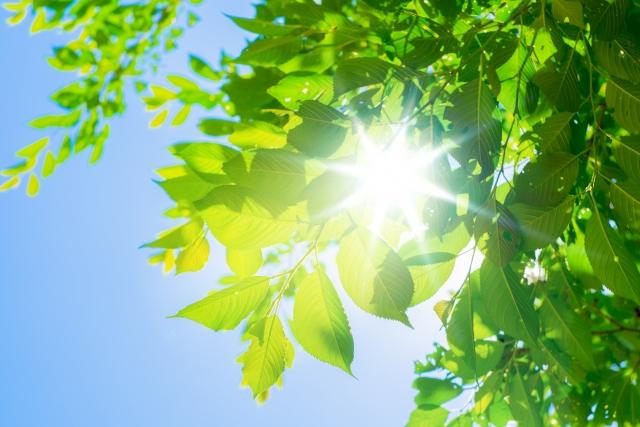 木々のあいだに差し込む太陽
