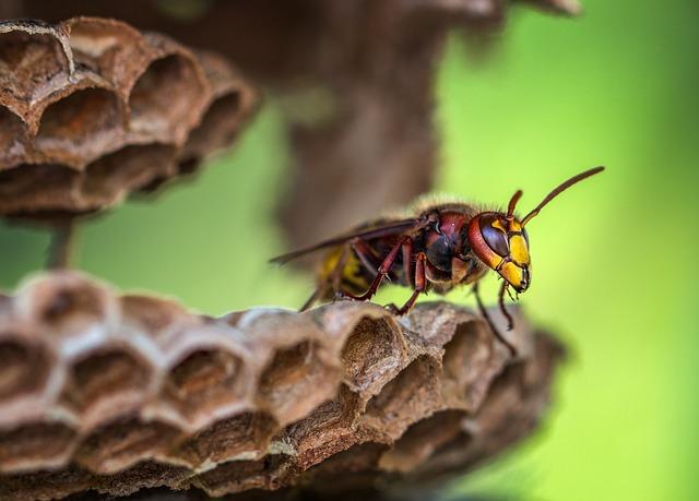 ハチの王様スズメバチ