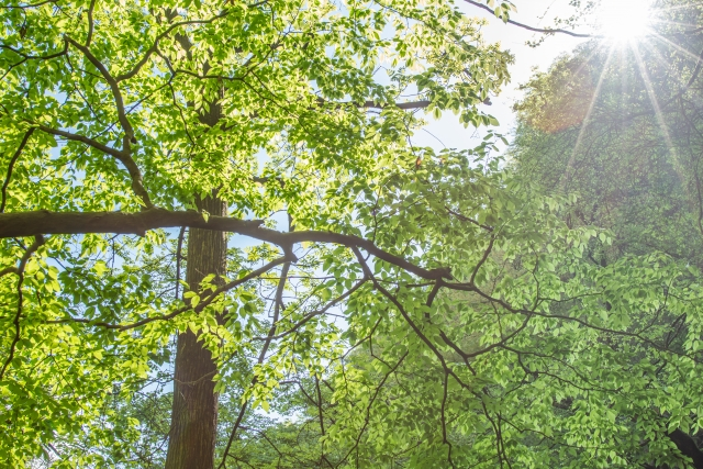 木の間から差し込む太陽の光