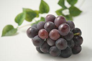 紫の房になったブドウ